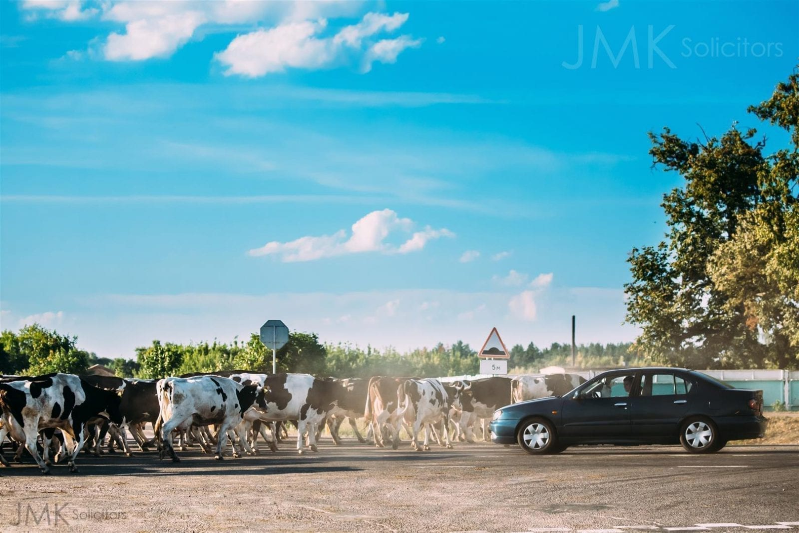 JMK Solicitors - Tips If You Are Involved In A Road Accident With An Animal